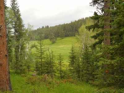 Deadwood, Lead Residential Lots & Land For Sale: Lot 20 Ironwood Estates