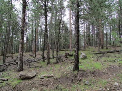 Pennington County Residential Lots & Land For Sale: 23228 Clear Creek