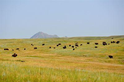 Sturgis Farm & Ranch For Sale: 207th