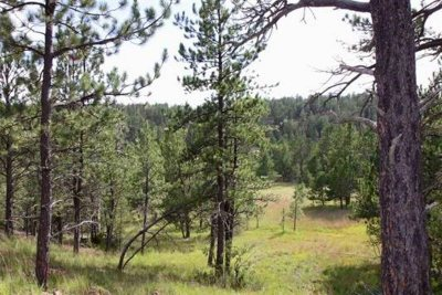 Residential Lots & Land For Sale: Tract 43 Calamity Jane Drive