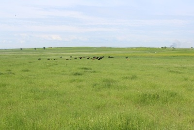 Newell SD Farm & Ranch For Sale: $470,400
