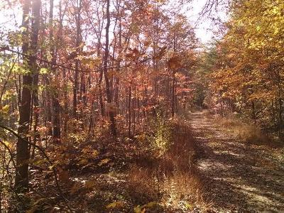 Residential Lots & Land For Sale: 2614 Dogwood Flat