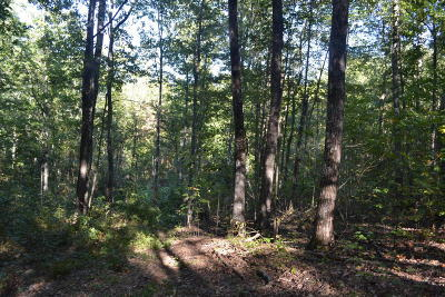 Marion Residential Lots & Land For Sale: 45.45 C Road