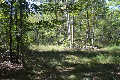 Marion Residential Lots & Land For Sale: 81.82ac C Road