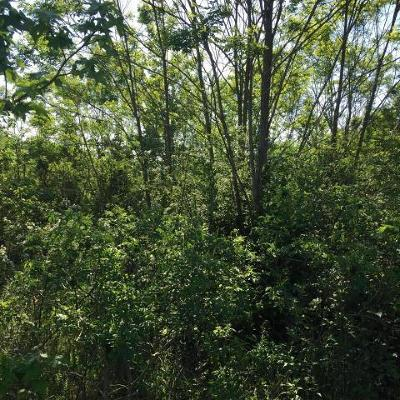Bryant Residential Lots & Land For Sale: County Rd 724