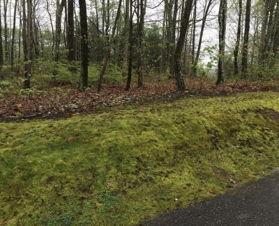 Lookout Mountain Residential Lots & Land Contingent: Maggie Bluff Cir