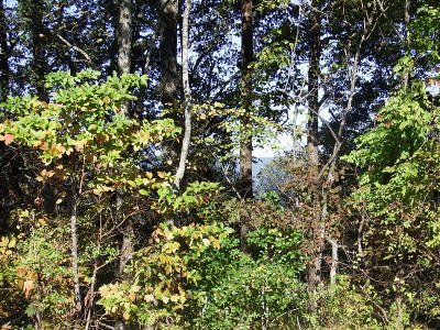 Hixson Residential Lots & Land For Sale: 6493 Fairview Rd