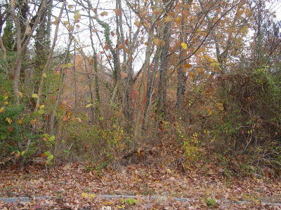 Red Bank Residential Lots & Land For Sale: Knollwood Ter