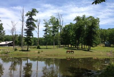 Farm For Sale: 570 Maple Branch Rd