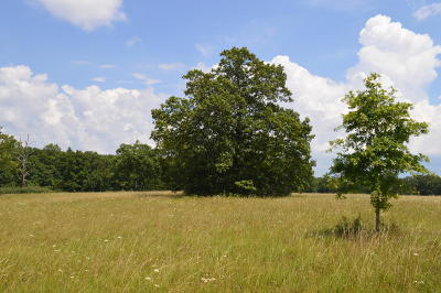 Residential Lots & Land For Sale: 6 Old Cc Rd