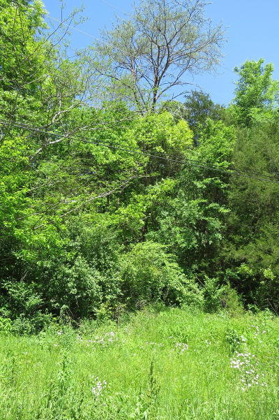 Wildwood Residential Lots & Land For Sale: Belree Cir #Lot # 7