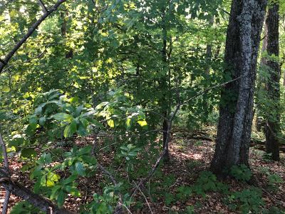 Hixson Residential Lots & Land For Sale: 6375 Fairview Rd