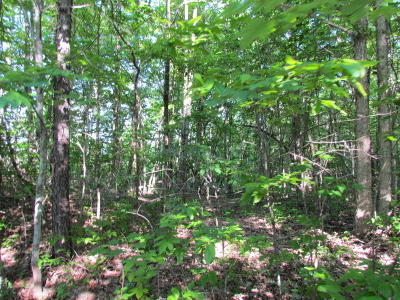 Marion Residential Lots & Land For Sale: 13 Tranquil Acres