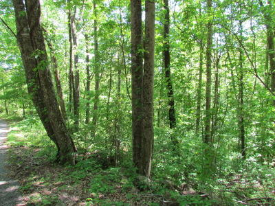 Marion Residential Lots & Land For Sale: 10 Sequatchie Mtn. Rd