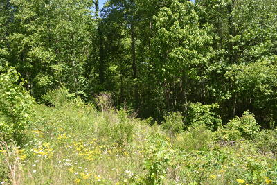 Residential Lots & Land For Sale: 15ac Raccoon Ridge Rd.