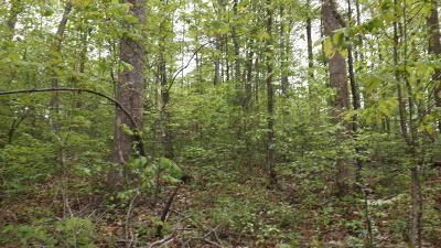 Residential Lots & Land Sold: Blue Springs Rd