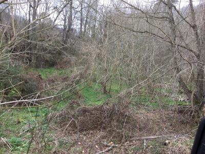 New Tazewell TN Residential Lots & Land For Sale: $15,000