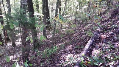 Campbell County Residential Lots & Land For Sale: Hiwassee View Drive