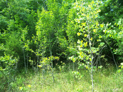 New Tazewell TN Residential Lots & Land For Sale: $74,600