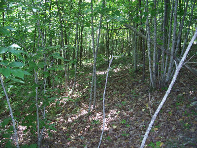 New Tazewell TN Residential Lots & Land For Sale: $39,178