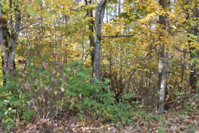 Seymour Residential Lots & Land For Sale: Water Oak Drive