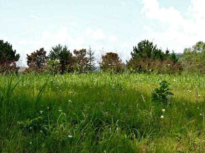 Jefferson County Residential Lots & Land For Sale: 441 Riverbend Drive