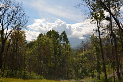 Gatlinburg Residential Lots & Land For Sale: 981 Wiley Oakley Drive