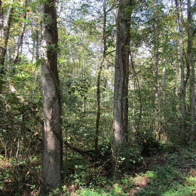 Campbell County Residential Lots & Land For Sale: Vinsant Estates Rd