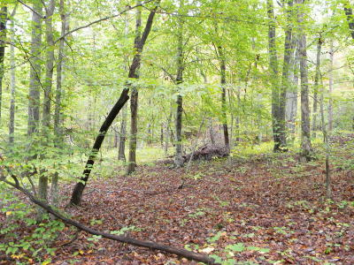 Union County Residential Lots & Land For Sale: 255 & 256 Big Ridge Point
