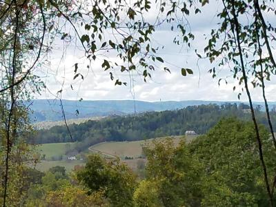 Grainger County Residential Lots & Land For Sale: 50 Acres Coffey Chapel Rd