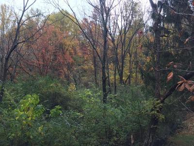 Gatlinburg Residential Lots & Land For Sale: E Foothills Drive