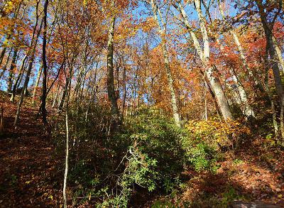 Gatlinburg Residential Lots & Land For Sale: Lot 11 Lower Alpine Way