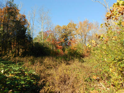 Corryton Residential Lots & Land For Sale: 7021 Tazewell Pike
