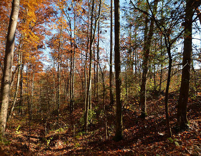Sevierville Residential Lots & Land For Sale: Lot 27 Sugar View Rd