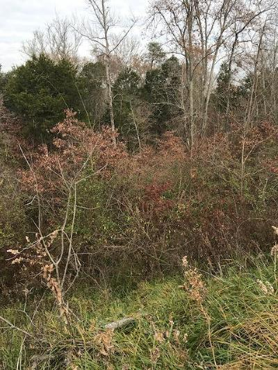 Lenoir City Residential Lots & Land For Sale: 14025 Highway 70