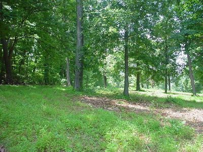 Campbell County Residential Lots & Land For Sale: Little Cove Creek Road