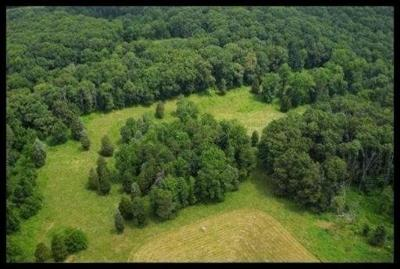 Knoxville Residential Lots & Land For Sale: Long Farm Way