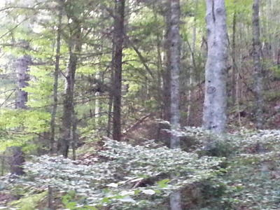 Rogersville Residential Lots & Land For Sale: 150-250 Pressmens Home--21.65 Acres Rd