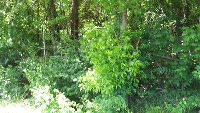 Knoxville TN Residential Lots & Land For Sale: $35,000