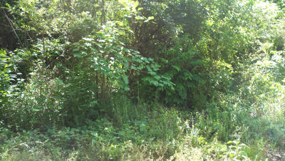 Knoxville TN Residential Lots & Land For Sale: $30,000
