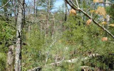 Sevierville Residential Lots & Land For Sale: Tr 18 Wesley Way