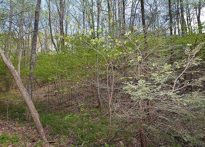 Sevierville Residential Lots & Land For Sale: Lot 199 Tsali Drive
