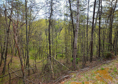 Sevierville Residential Lots & Land For Sale: Lot 131 Silver Poplar Ln