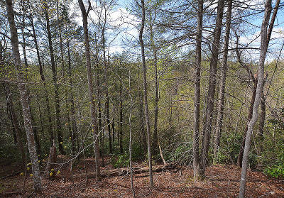 Gatlinburg Residential Lots & Land For Sale: Lots 5-7 Shielview Est