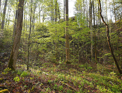 Gatlinburg Residential Lots & Land For Sale: Lot Po14 Bause Watson Ln