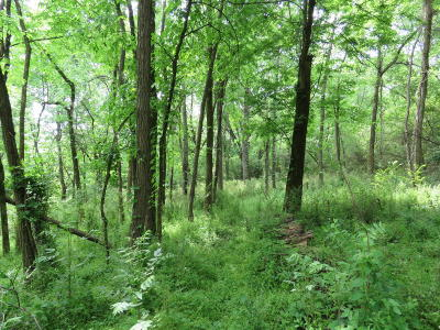 Knoxville Residential Lots & Land For Sale: 1513 Stony Point Rd