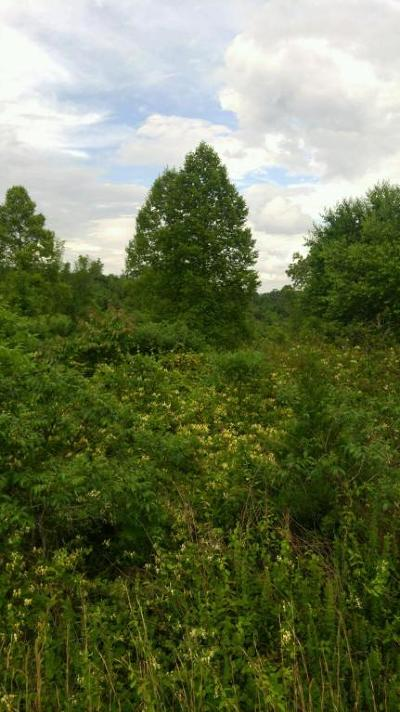 Residential Lots & Land For Sale: Parkview Drive Drive