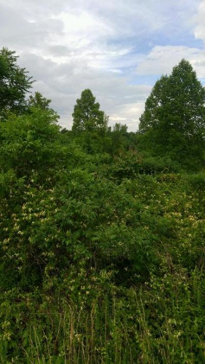 Residential Lots & Land For Sale: Parkview Drive Lot 293