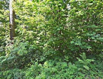 Gatlinburg Residential Lots & Land For Sale: Lot 18 Tanrac Trail