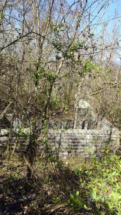 Knoxville Residential Lots & Land For Sale: 11207 Elm Crest Lane